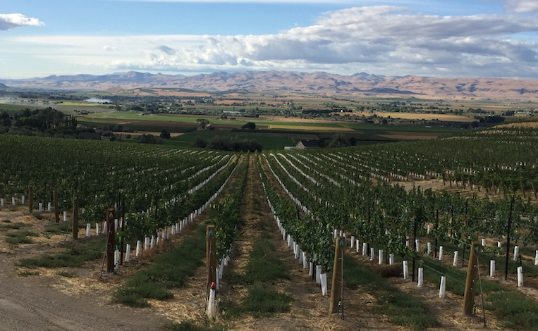 J Victor Vineyard overlooks the Sunnyslope Wine District in the Snake River Valley near Caldwell, Idaho. (Photo by Eric Degerman/Great Northwest Wine)